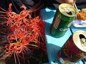 ヒガンバナとお花見ビール