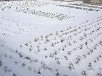 畑の雪景色!