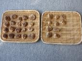 干し椎茸作り